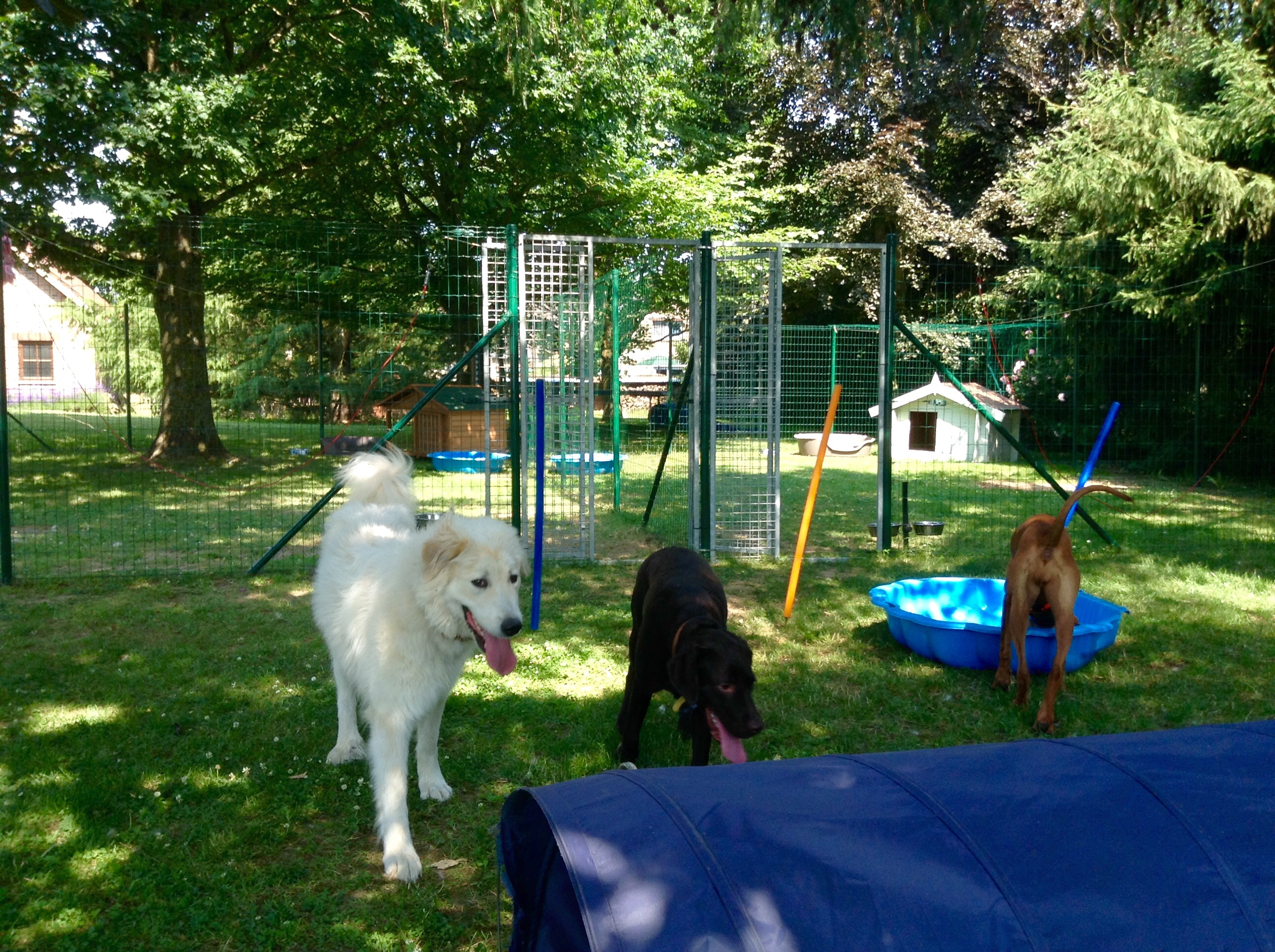Dog kennels for Dog boarding places near me